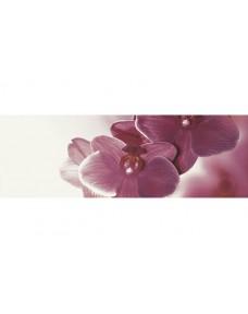 Abrila Inserto Kwiat B декор 20×60 см, Paradyz