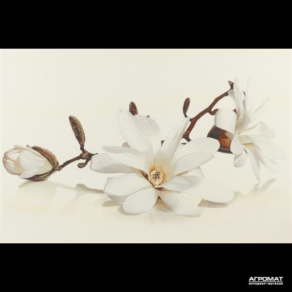 Плитка Opoczno Flora MAGNOLIA декор